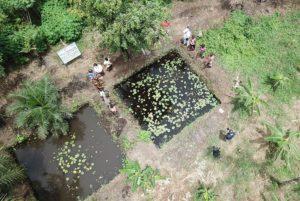Bassins piscicoles vus du drone © Thierry Barbaut