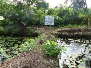 Bassins piscicoles