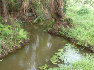 Cours d'eau de la ferme école