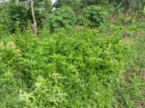 Les plantes de la ferme école